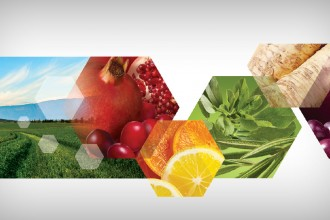AMWConnections_BLOG_RestageDitto_AMW023